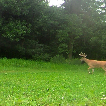 Deer Food Plot
