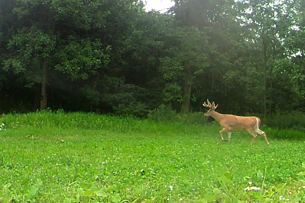 Deer Food Plot - Double Nickel Outdoors